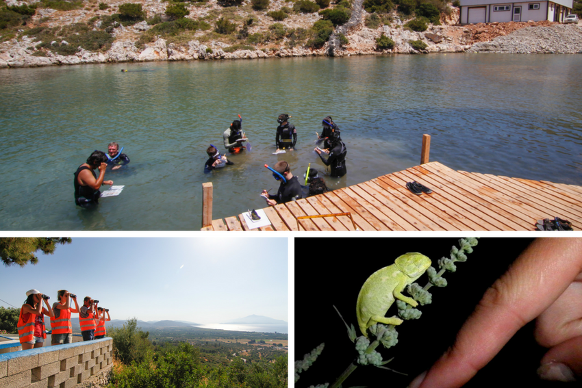 Conservation internship programs in Greece - Intern Abroad HQ