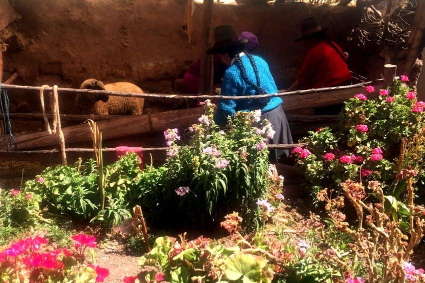 NGO Support Internships in Peru Cusco