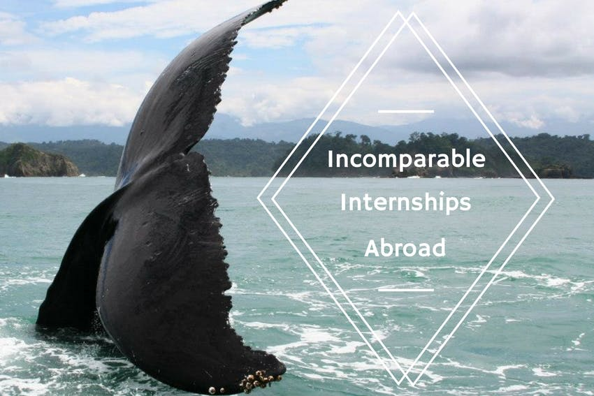 Affordable internship opportunities abroad