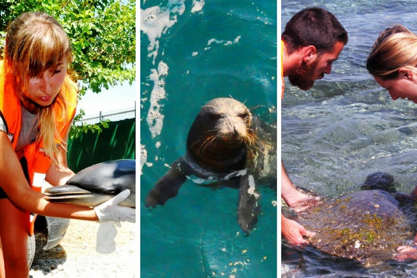 Marine Mammal Conservation internship in Greece