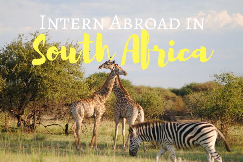 Summer Intern Abroad in South Africa 2018