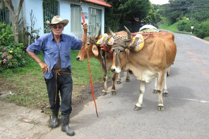 Tico farmer with livestock in Costa Rica