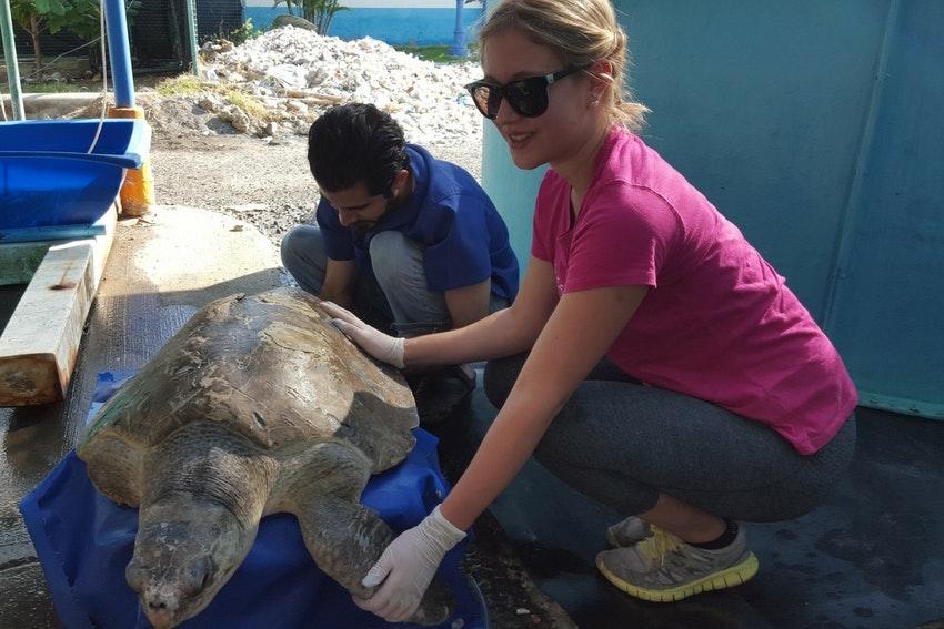 Wildlife conservation internship in Costa Rica