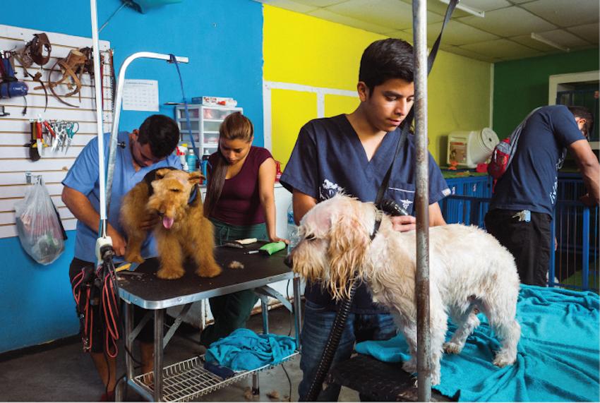 Animal Care Internships Summer 2019