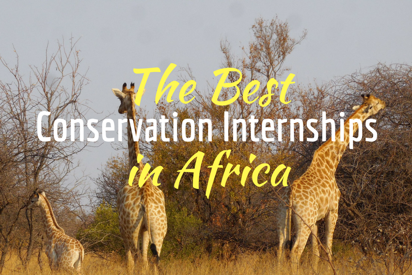 The best conservation internships in Africa 2018
