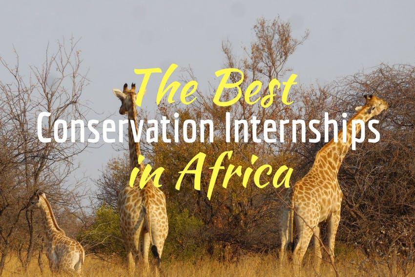 The best conservation internships in Africa 2018