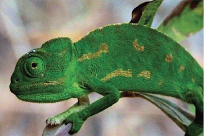 Animal Care & Wildlife Conservation Internships Abroad Intern Abroad HQ