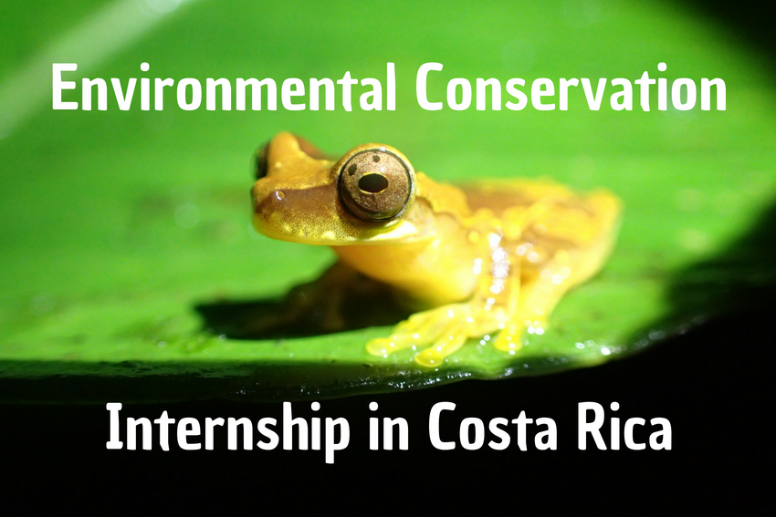 Environmental Conservation Internship in Costa Rica