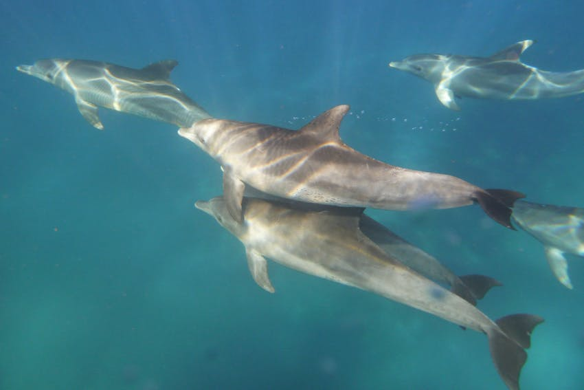 Dolphins swimming in Greece, Marine Conservation internship, Intern Abroad HQ