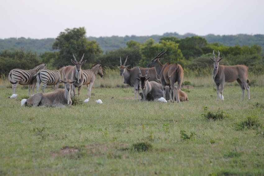 Dinokeng Game Drive South Africa
