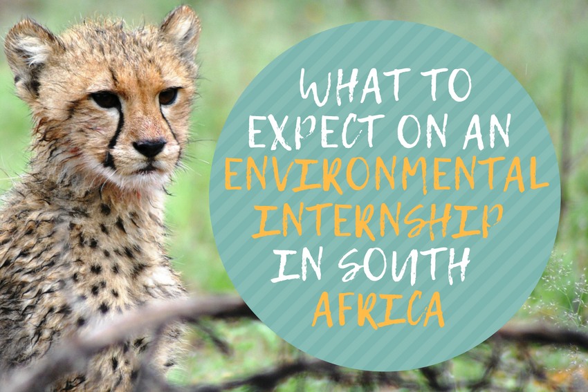 What to expect on an Environmental Internship in South Africa