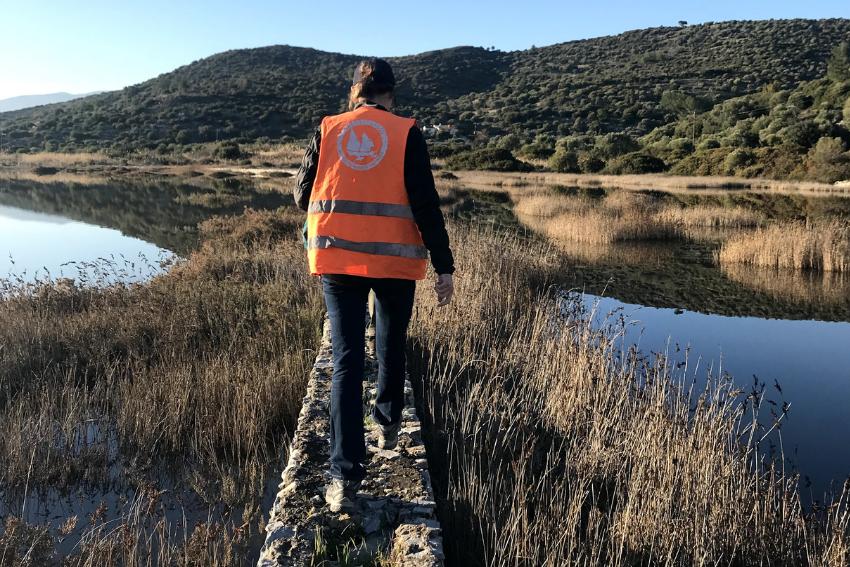 Aegean Marine Conservation internship in Greece, Intern Abroad HQ