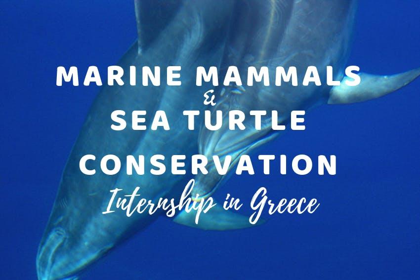 My Marine Mammals & Sea Turtle Conservation internship in Greece