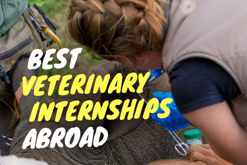Best Veterinary Internships Abroad in 2021 & 2022 with Intern Abroad HQ.