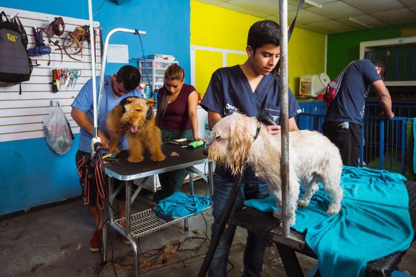 Veterinary Internship in Guatemala