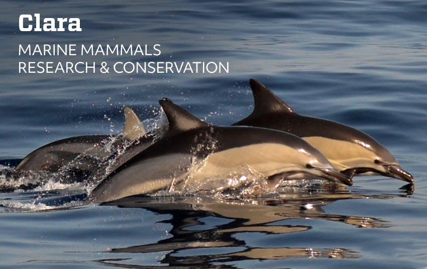 Clara's Remote Marine Mammals Research & Conservation Internship Experience with Intern Abroad HQ.