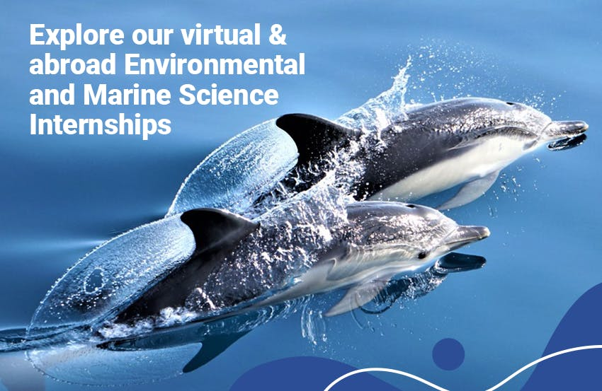 Explore abroad and virtual Marine Biology & Conservation Internship opportunities offered by Intern Abroad HQ.