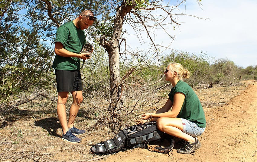 Reserve Management Wildlife Conservation Internship in South Africa, Kruger National Park with Intern Abroad HQ.