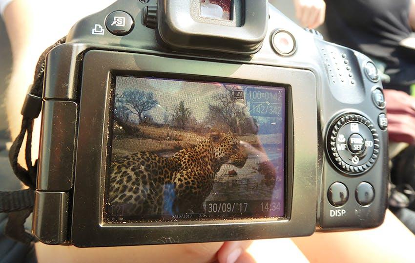 Intern Abroad HQ Reserve Management Wildlife Conservation Internship in South Africa, Kruger National Park.