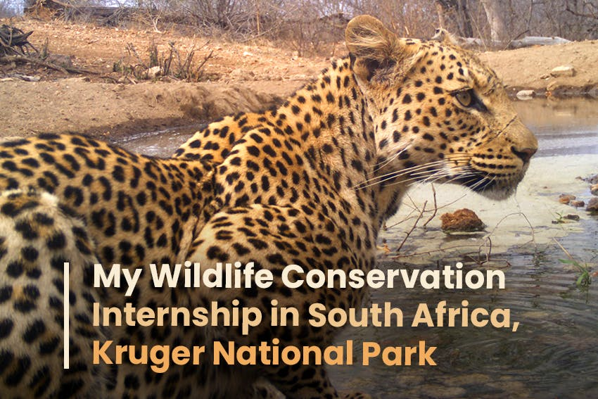 Tumpa's experience on her Wildlife Conservation Internship on Reserve Management in South Africa, Kruger National Park with Intern Abroad HQ.
