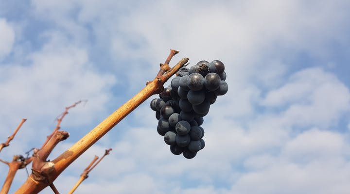 Viticulture & Agriculture internships in Greece