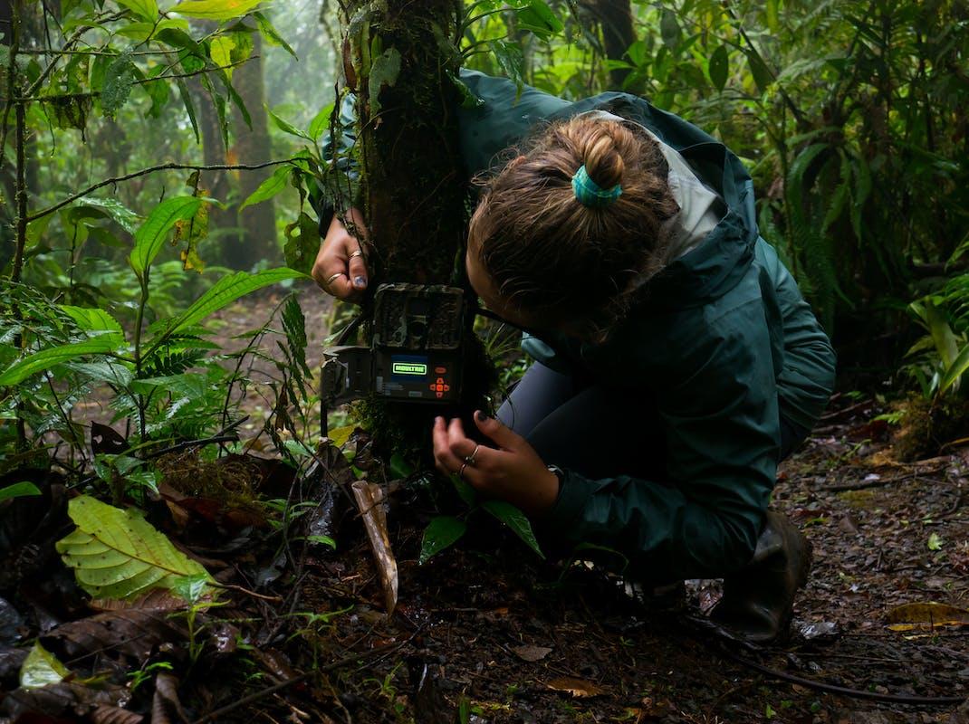 Environmental Conservation internship in Costa Rica
