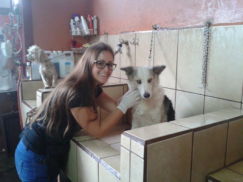 Veterinary internships in Costa Rica