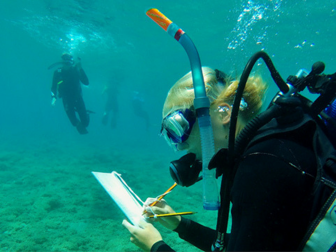 Diving Surveys Marine Conservation internships in Greece