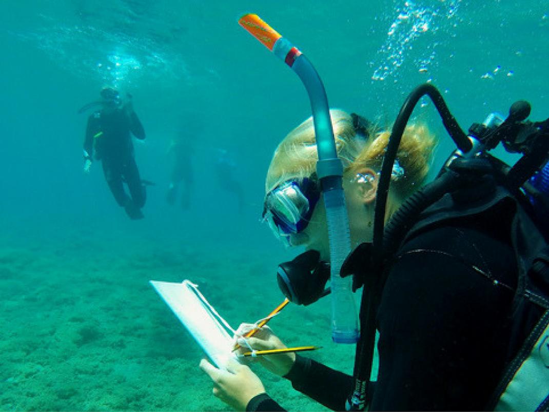Diving Surveys Marine Conservation internships in Greece