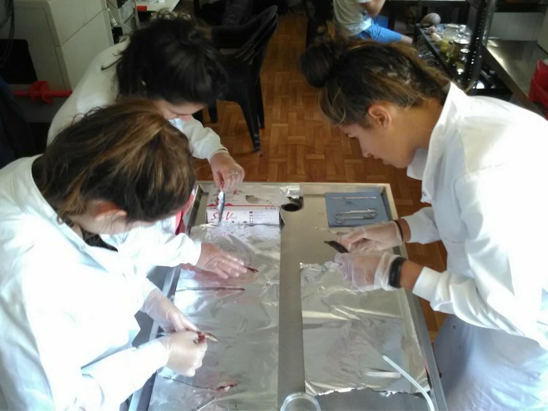 Mircoplastic Lab Research internships in Greece