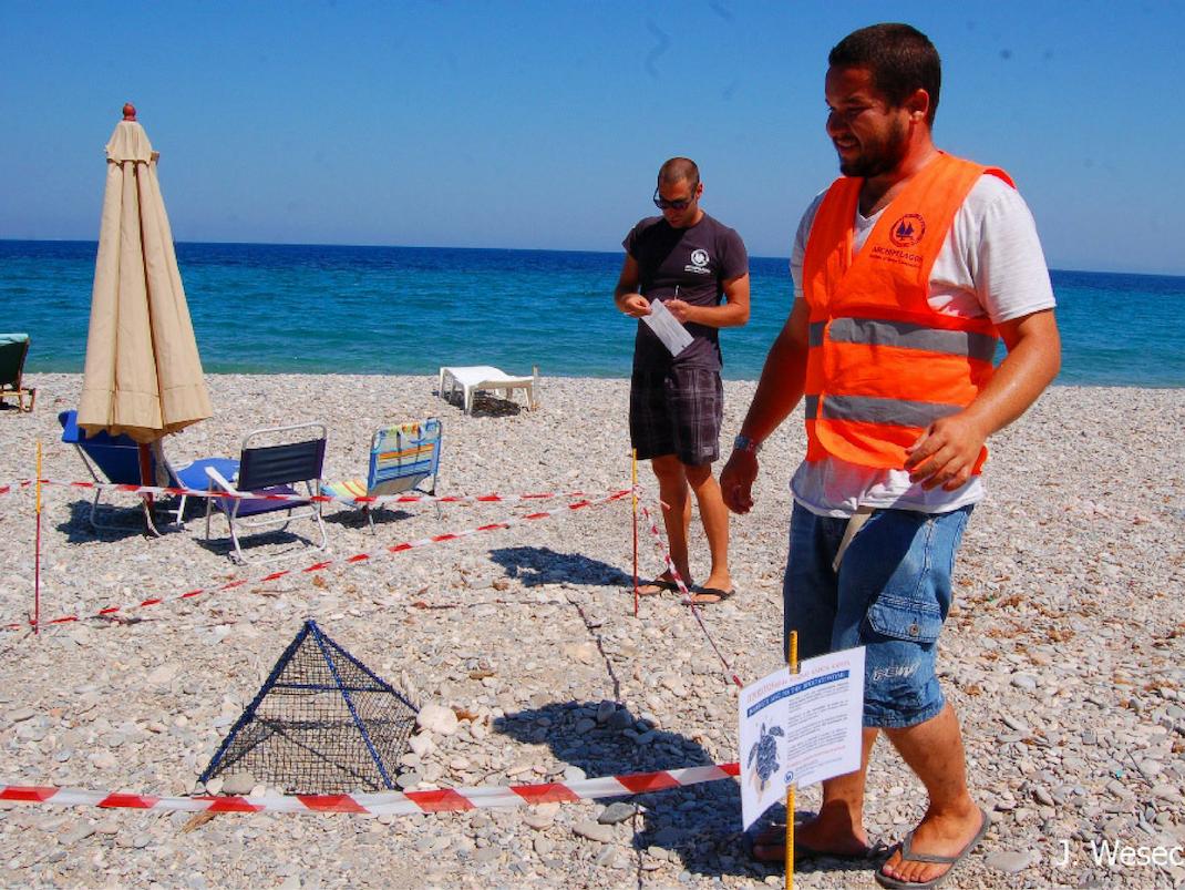 Marine Mammal and Sea Turtle Conservation internships in Greece