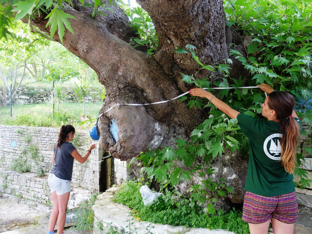 Terrestrial Conservation internships in Greece