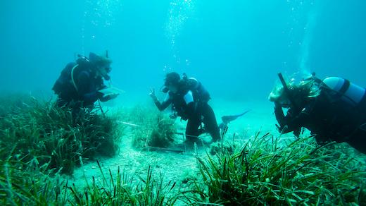Aegean Marine Conservation Internship in Greece