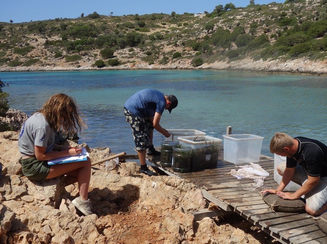 Interns working in a marine mammal sanctuary in Lipsi, Greece