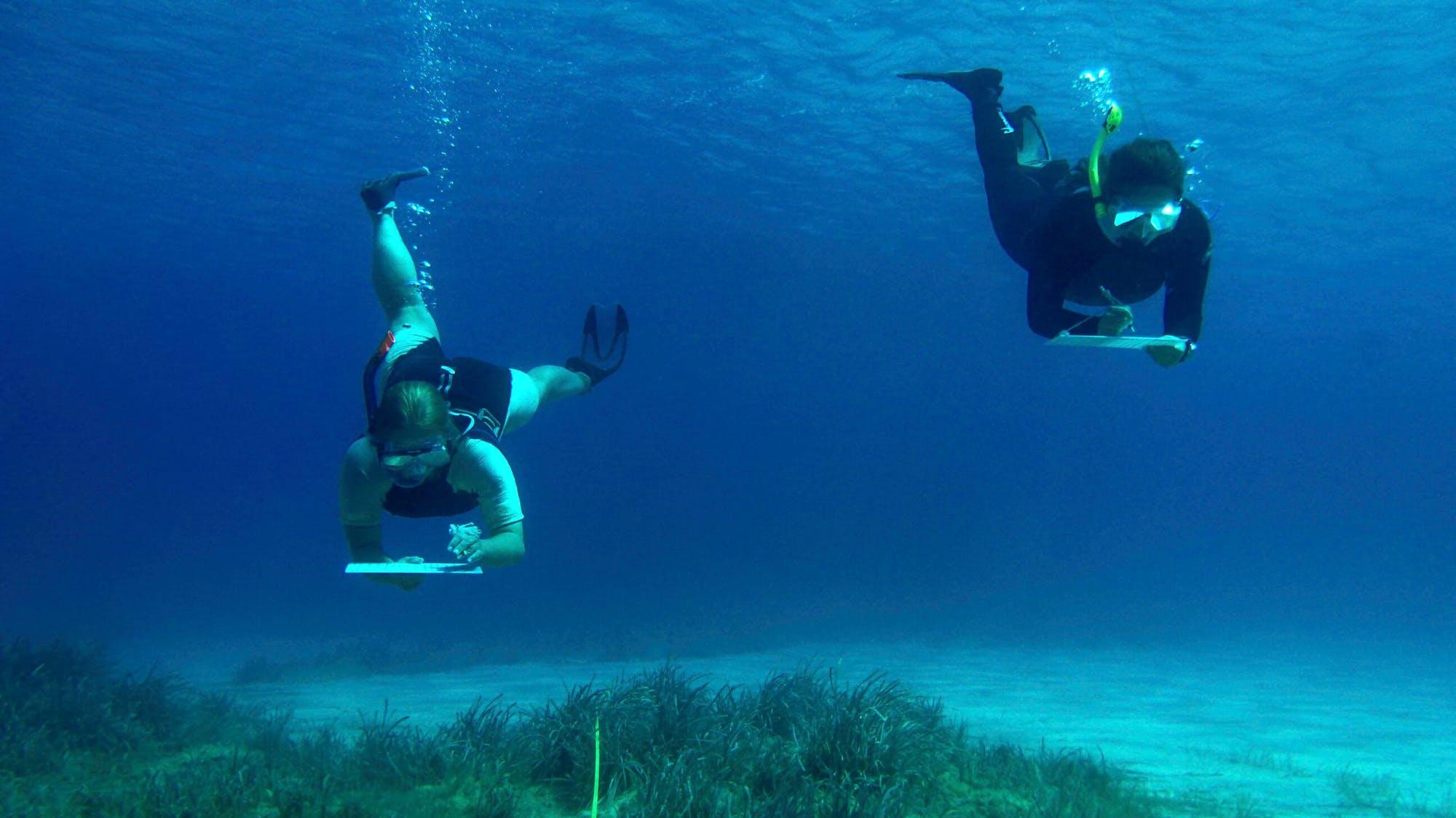 Aegean Marine Science & Island Conservation Internship in Greece