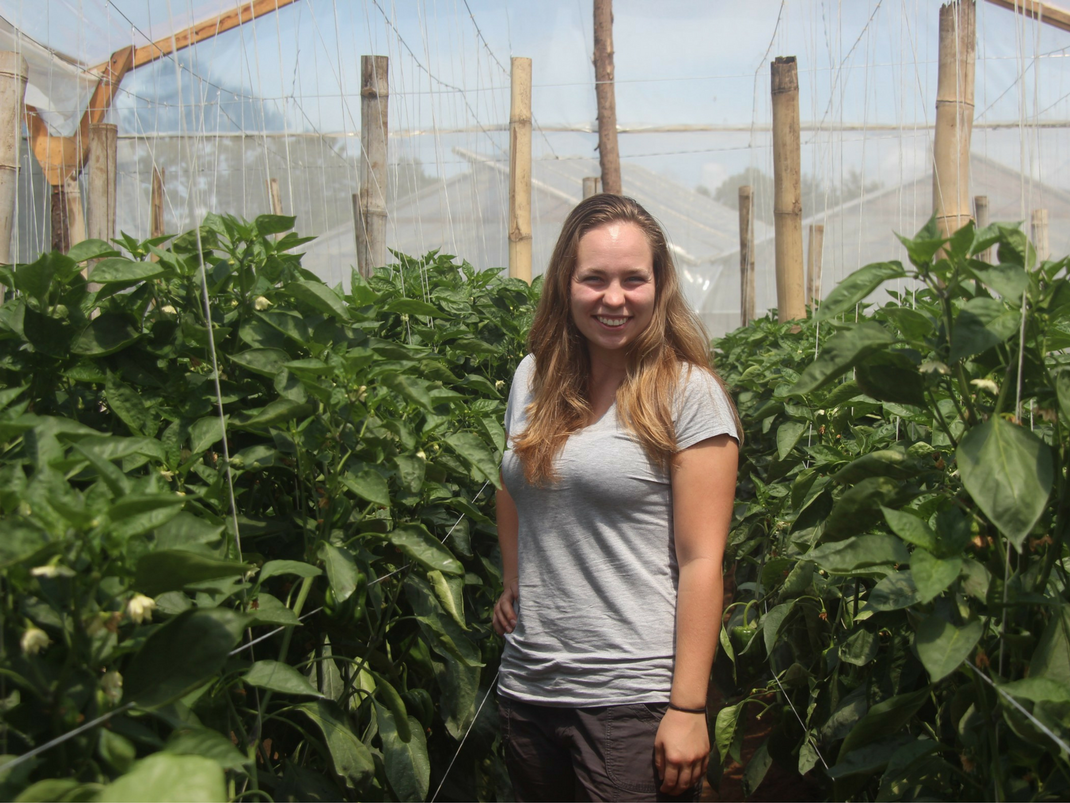 Agriculture internship in Guatemala