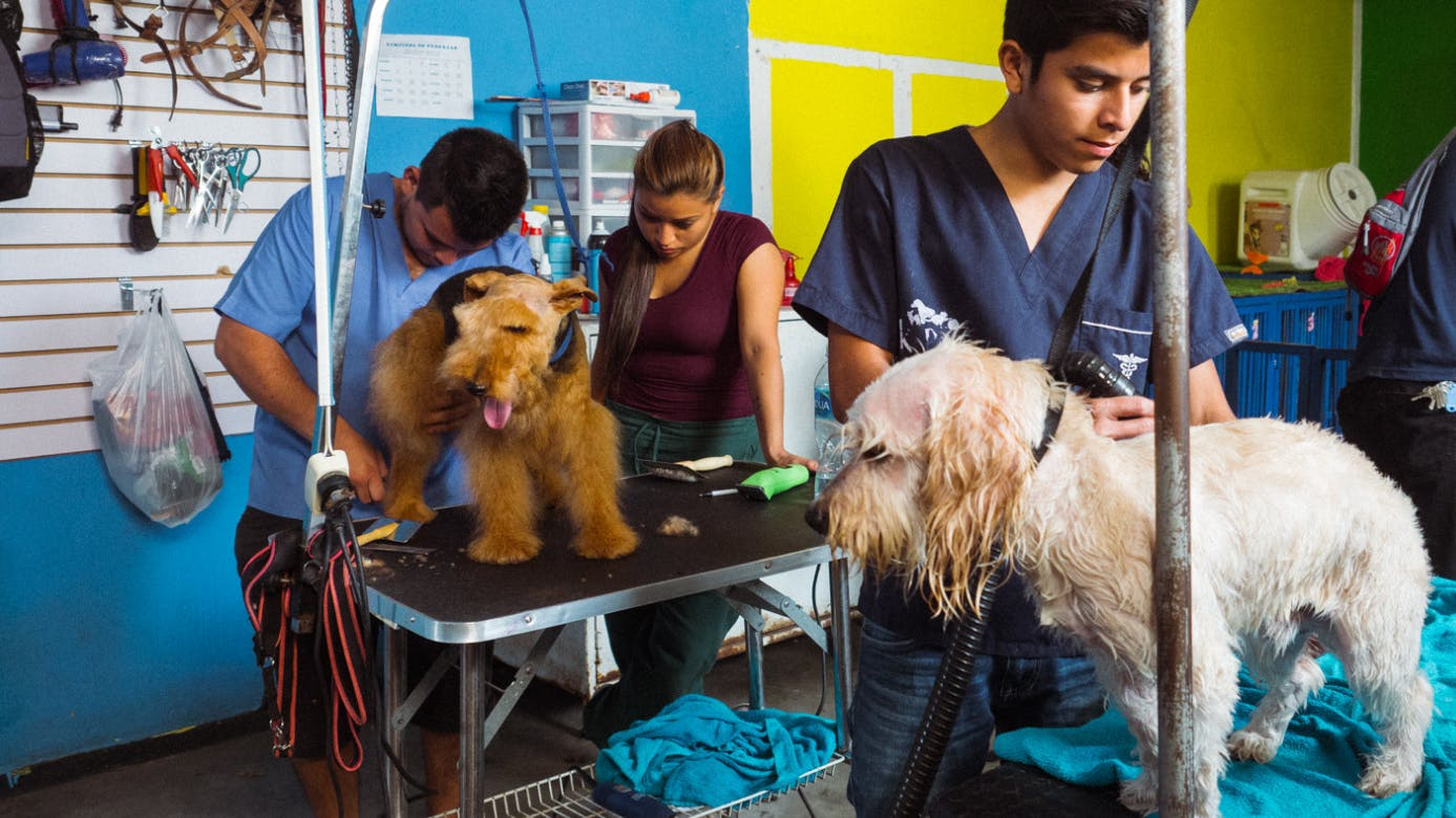 Animal and Veterinary Care