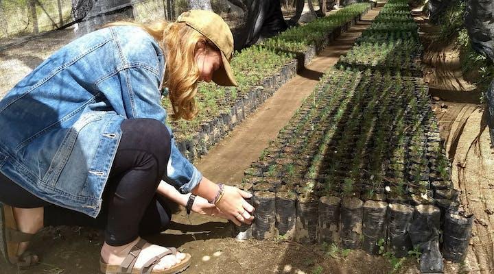 Coffee Production internship in Guatemala