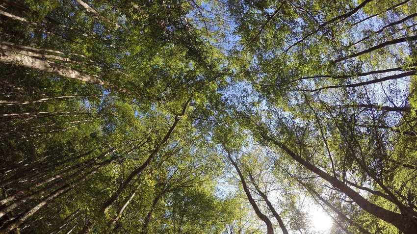 Environmental Conservation & Ecology internships in Rome