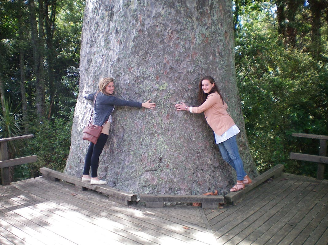 Tree hugging in Northland, Bay Of Islands, New Zealand