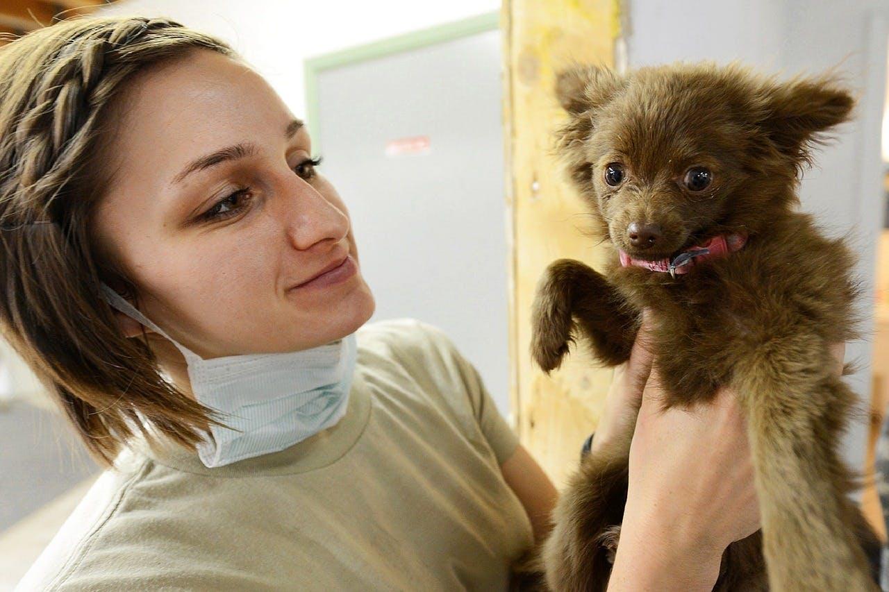 Veterinary Internships in Cusco