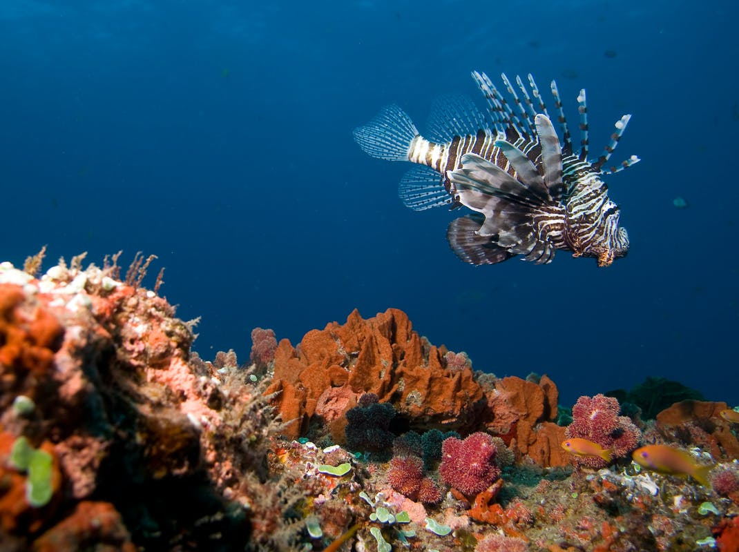 Marine Biology and Reef Conservation, South Africa, Intern Abroad HQ