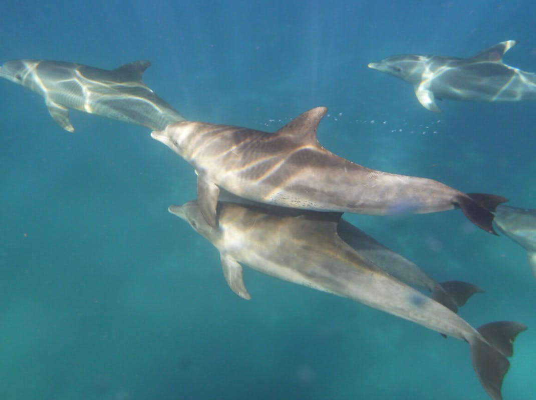 Dolphins swimming, Intern Abroad HQ, South Africa