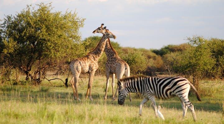 Dinokeng Game Reserve Wildlife Conservation Internships