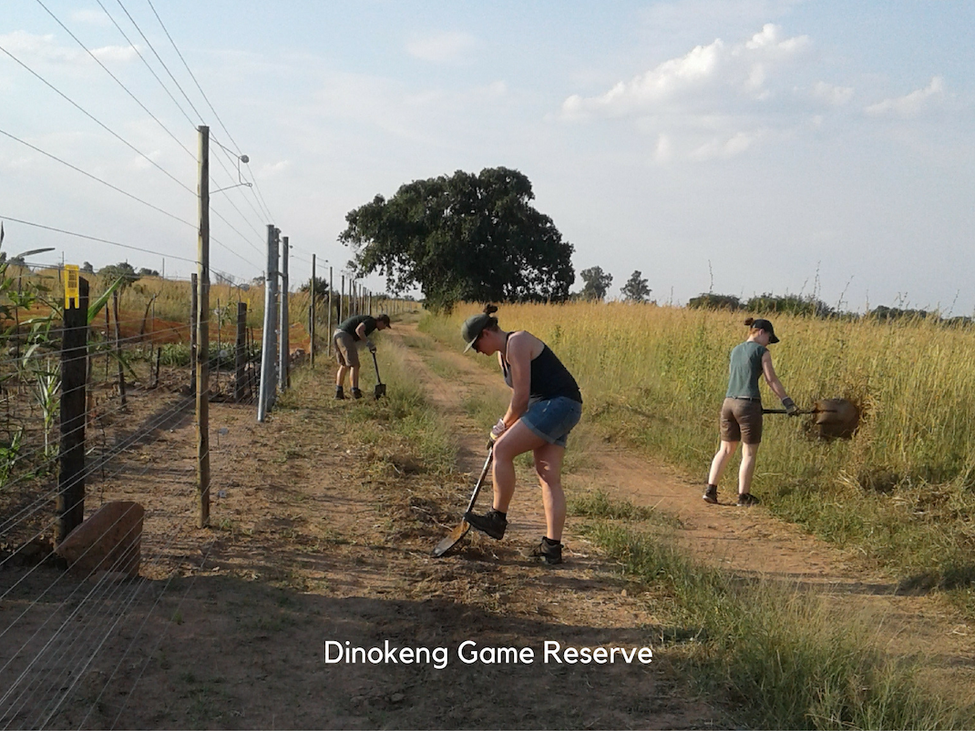 Internships in Dinokeng Game Reserve interns making fire breaks on the fence line