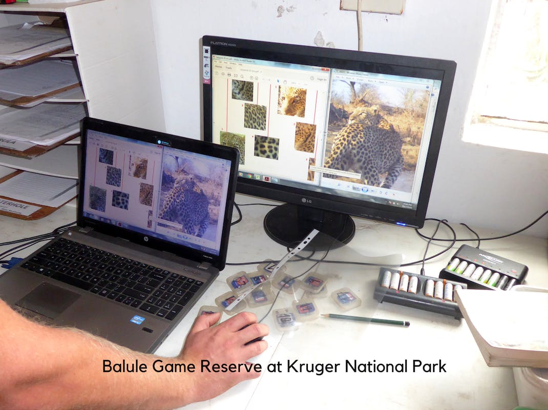 Internships in Balule Game Reserve at Kruger National Park species identification from camera trap photos