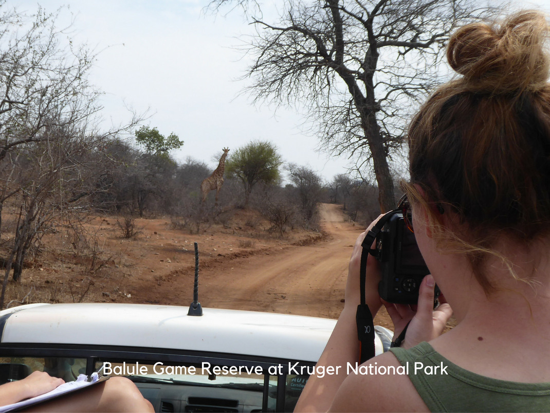 Internships in Balule Game Reserve at Kruger National Park intern photographs a giraffe