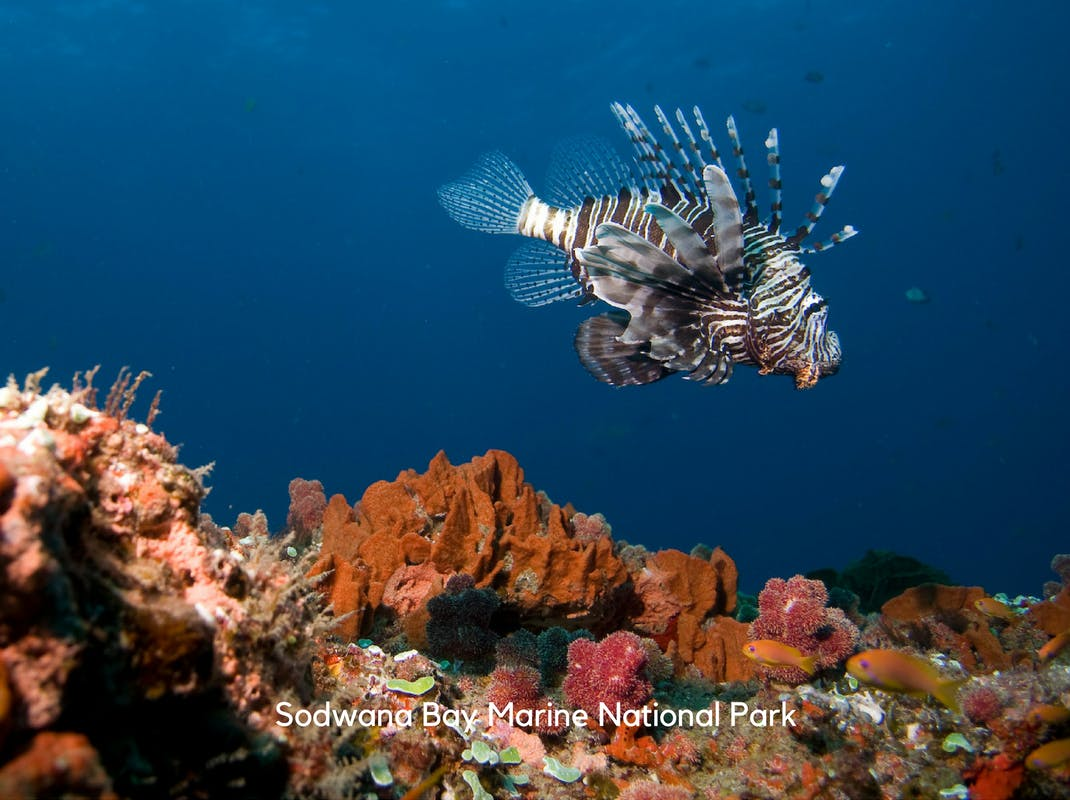 Marine Conservation Internships in Sodwana Bay Caine Delacy Lionfish and soft coral