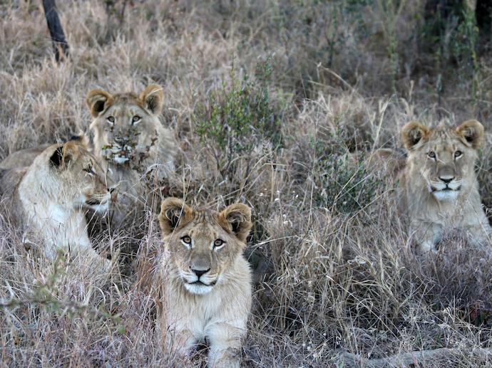 Intern Abroad in South Africa - Environmental Internships