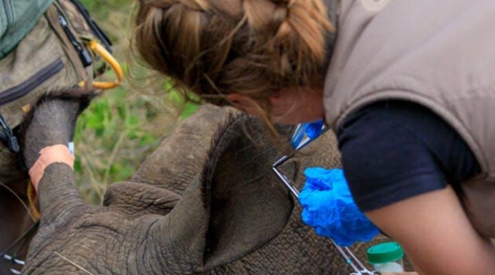 Wildlife Veterinary Internships at Gondwana Game Reserve